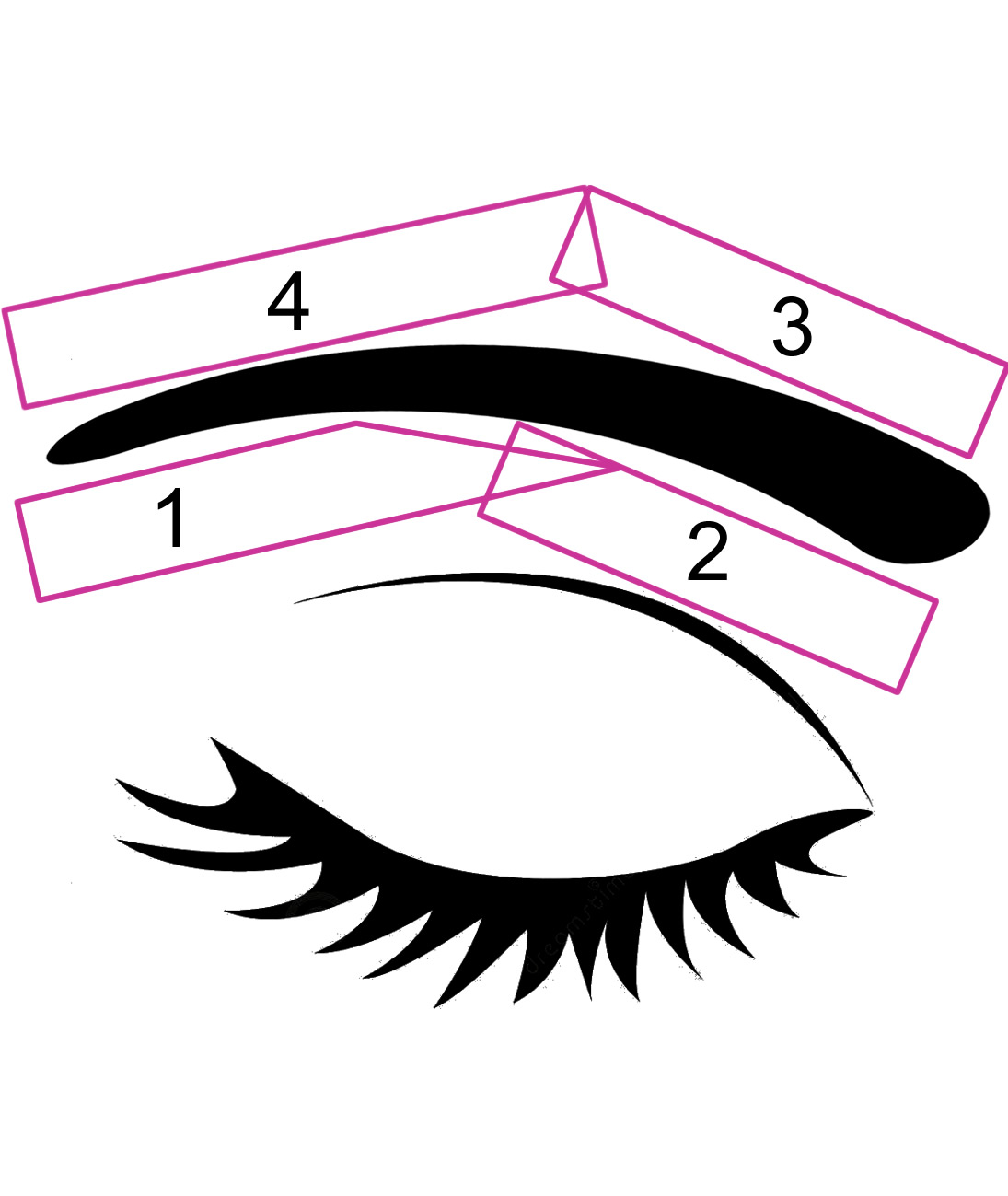 Eyebrow Waxing Stages
