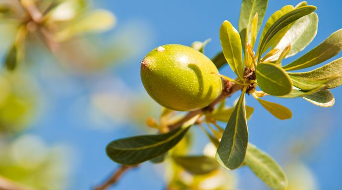 What is Argan Oil